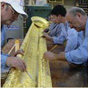 Experts working on the delicate gilding process